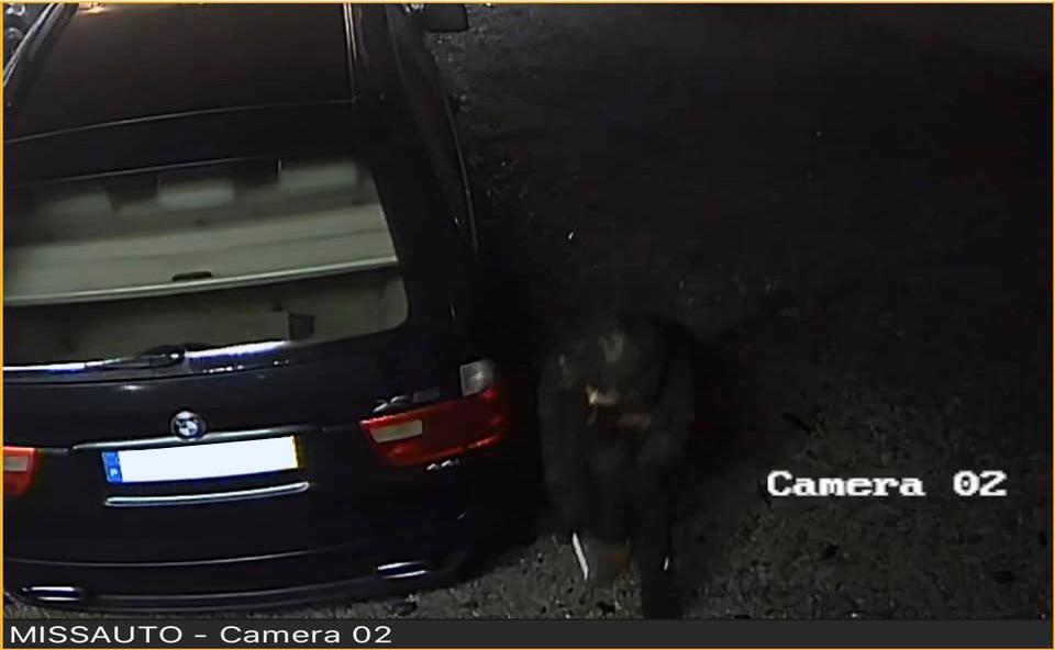 Ladrão tenta roubar jantes de BMW X5 em Braga
